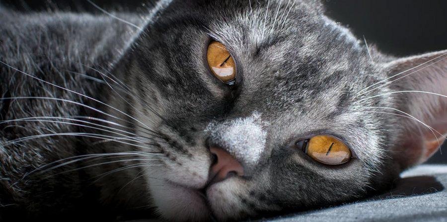 Todo lo que necesitarás para tu gato en etapa senior