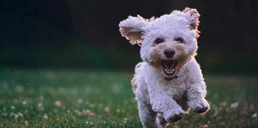 Cosas extrañas y curiosas que hacen los perros