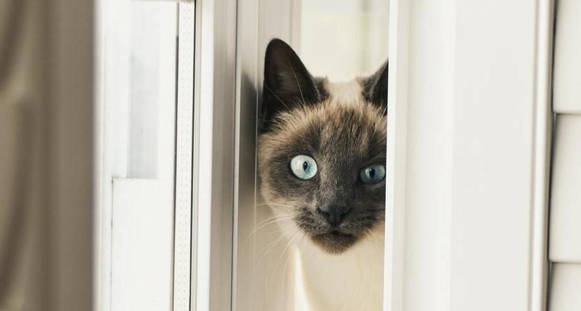 ¿Quieres darle un baño a tu gato? Mira esta guía para empezar