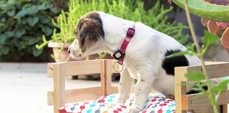 ¿Cómo hacer una cama para tu perro?