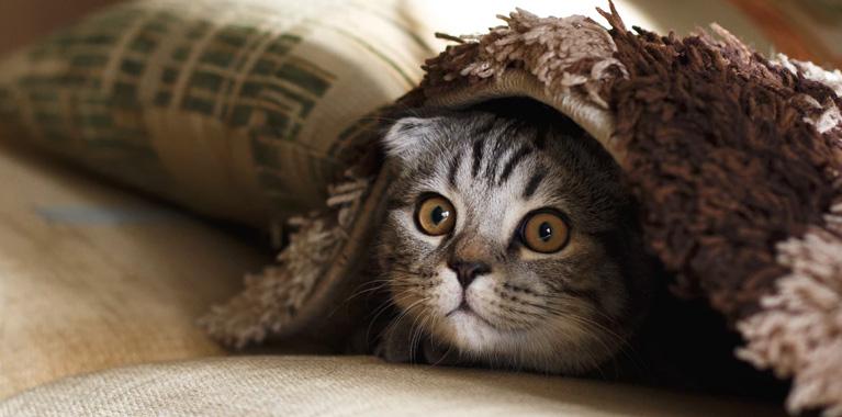 10 cosas raras que hacen los gatos