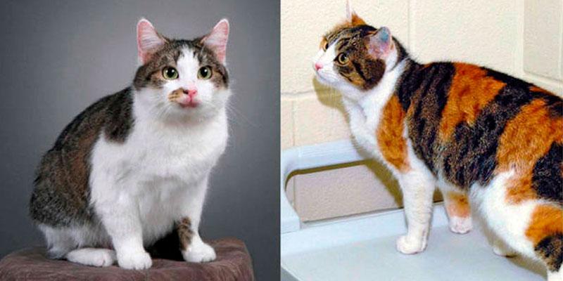 gatos famosos-CC clonado
