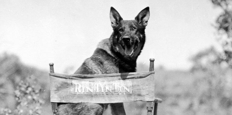 Los 5 perros más famosos de la historia