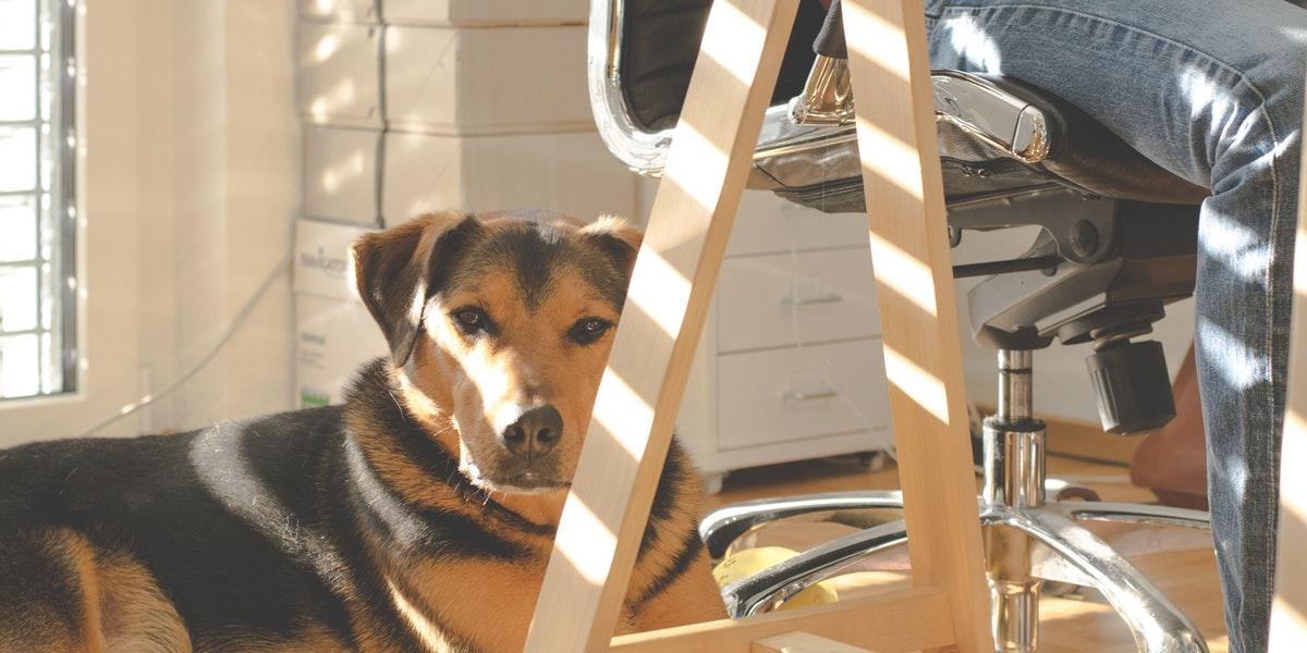 Cómo hacer más pet friendly tu hogar