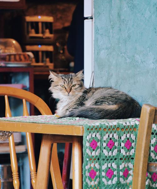 Cómo hacer tu hogar más pet-friendly