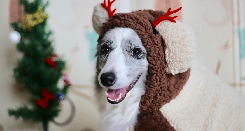 6 ideas para regalar a tu perro en Navidad