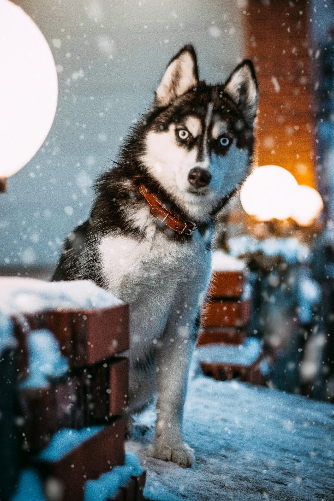 Consejos y cuidados para mascotas en Año Nuevo