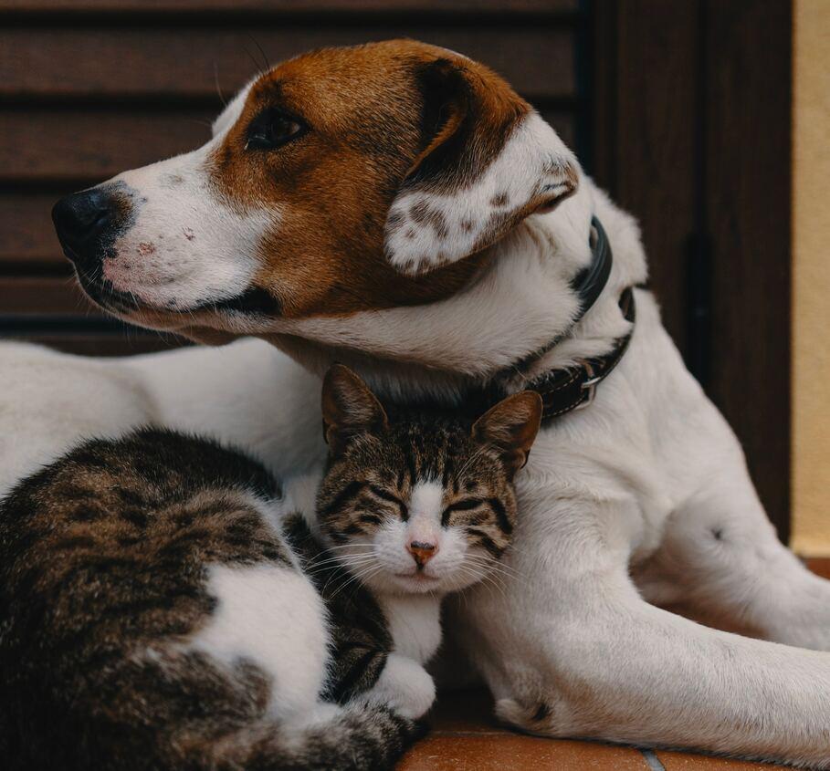 ¿Dónde inscribir a mi mascota con la Ley de Tenencia Responsable?