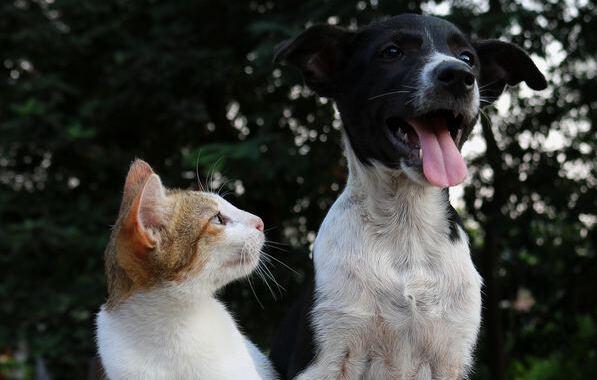 Adopta una mascota en verano: tips para recibirlos como se merecen