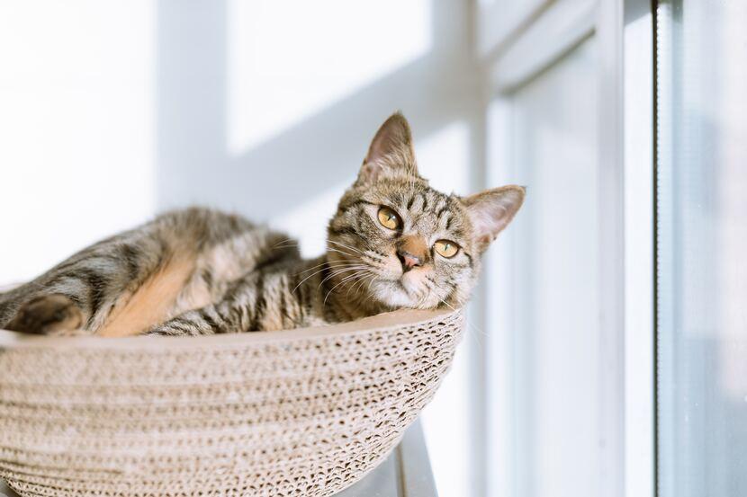 hoteles que aceptan mascotas gato