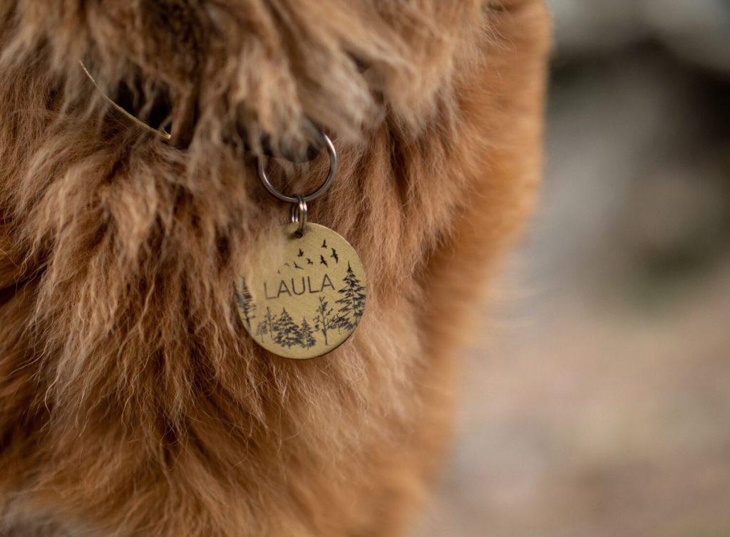 adopta una mascota identificación