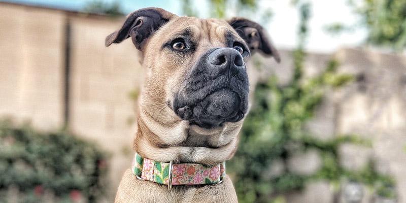 collar alternativa chip para perro