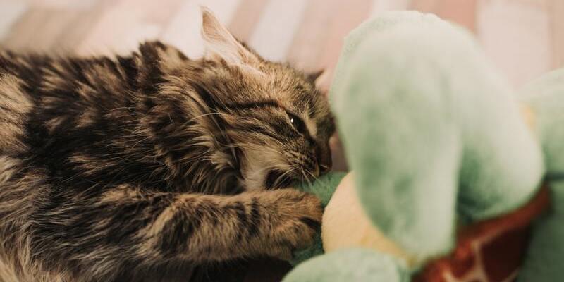 gato con juguete con catnip