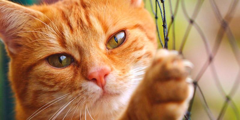 gato vacunas
