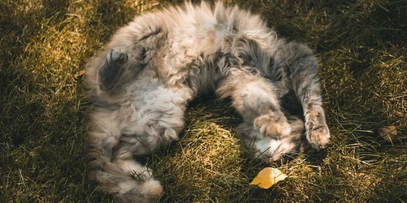 gato relajado con catnip