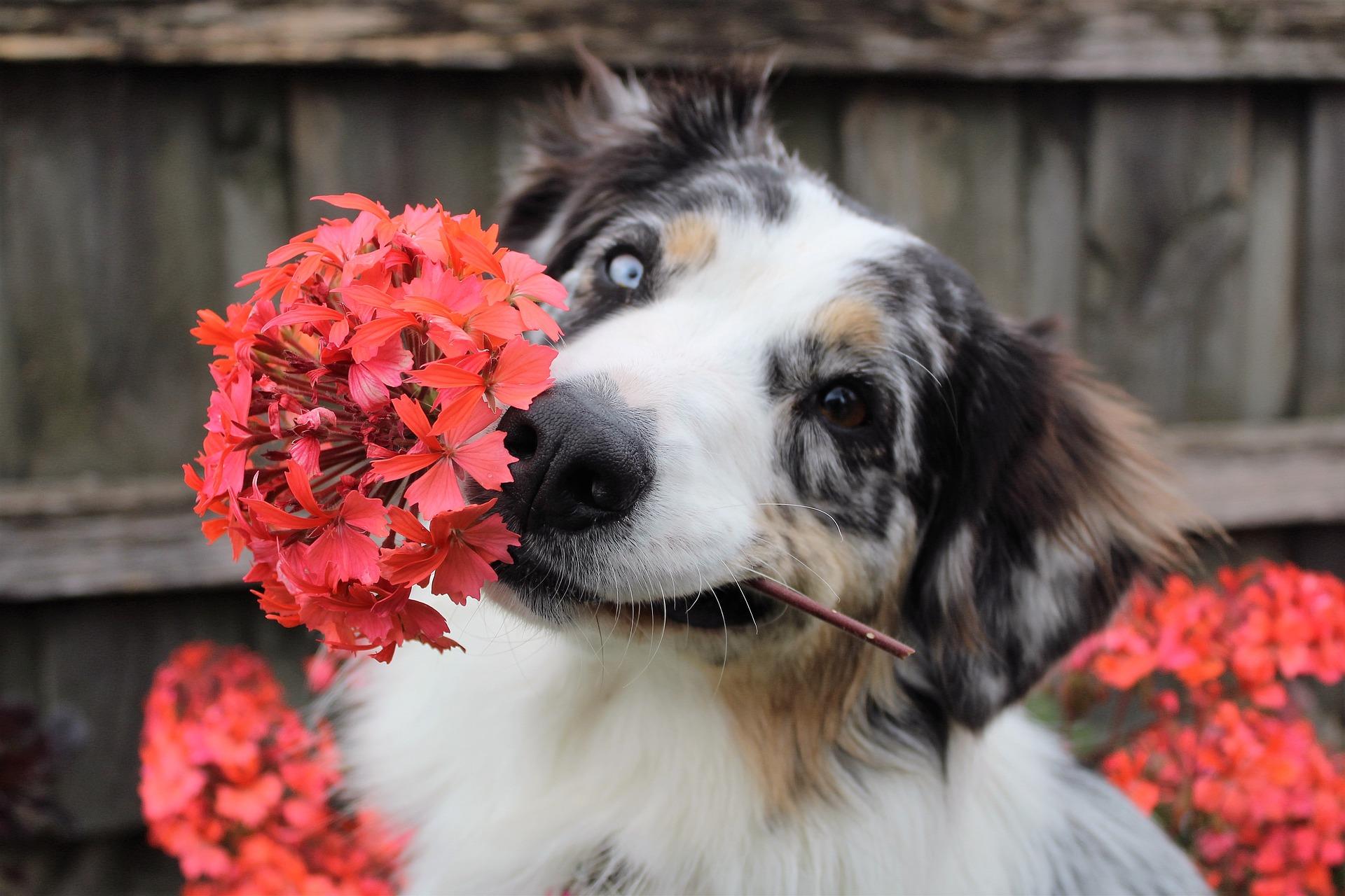 ¿Qué plantas son tóxicas para los perros?