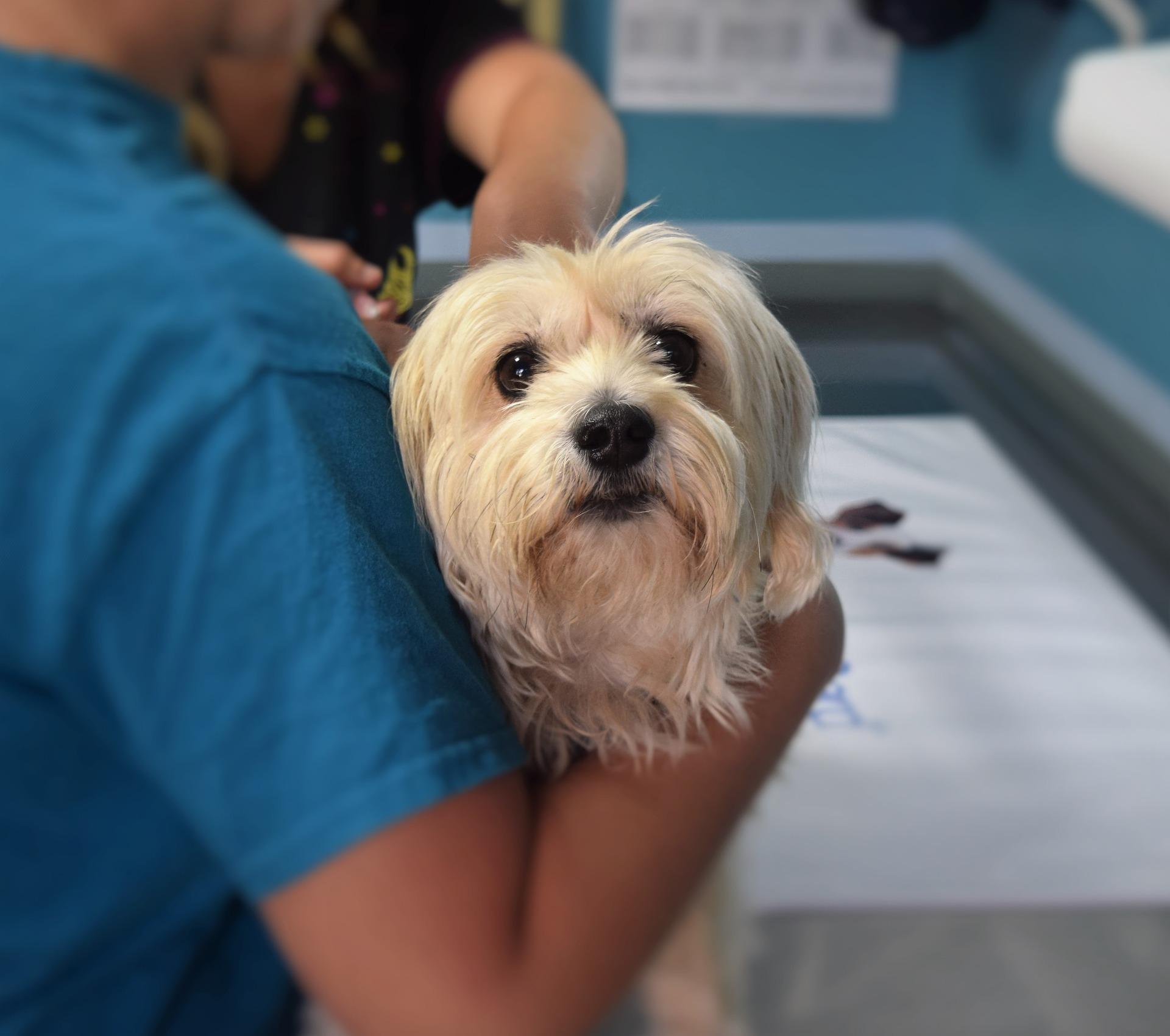 vacunas para perro en el veterinario