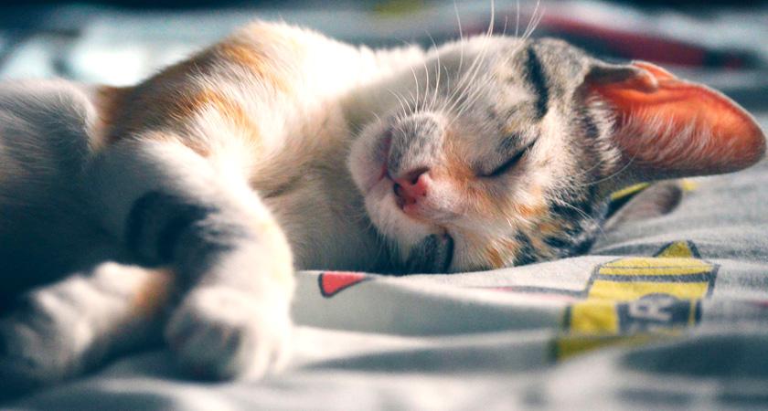 Cómo elegir las camas para gatos perfectas para estar en casa