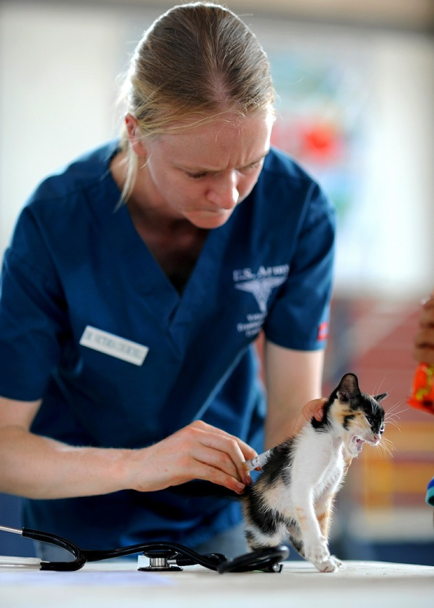 gato examinado por médico