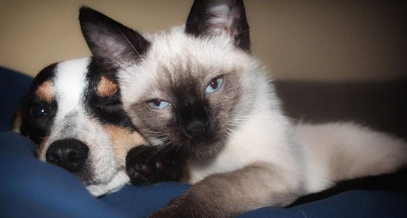 Cuidados de las mascotas en la prevención del coronavirus