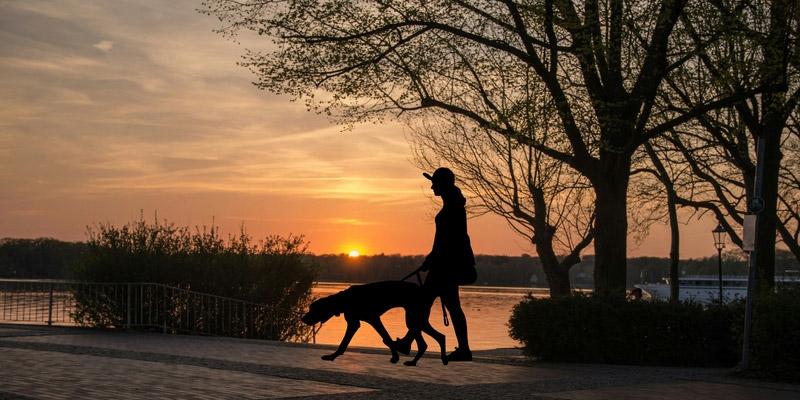 mujer paseando a perro al atardecer