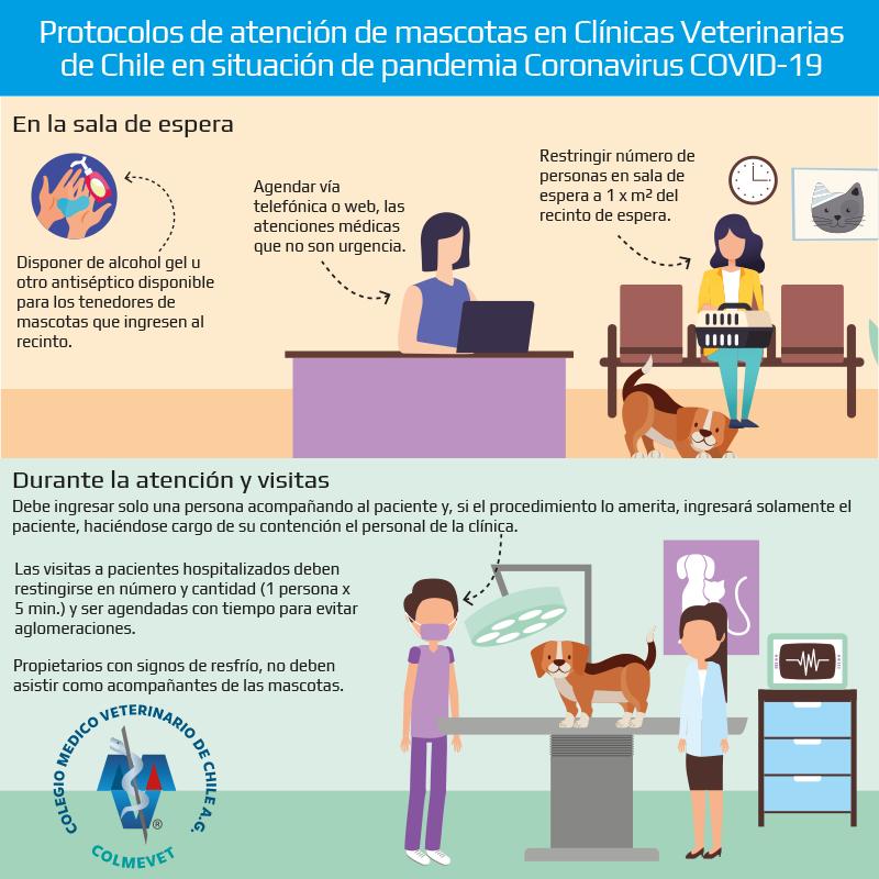 consultas veterinarias covid19