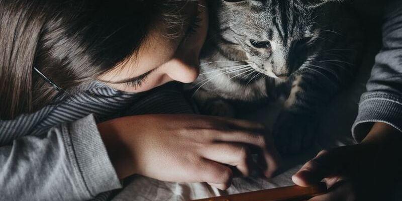 gato con app jugando en cuarentena