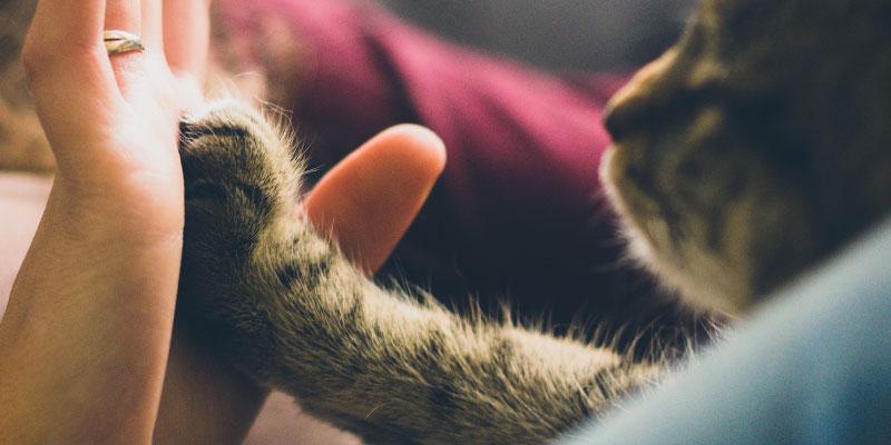 gatito con pata