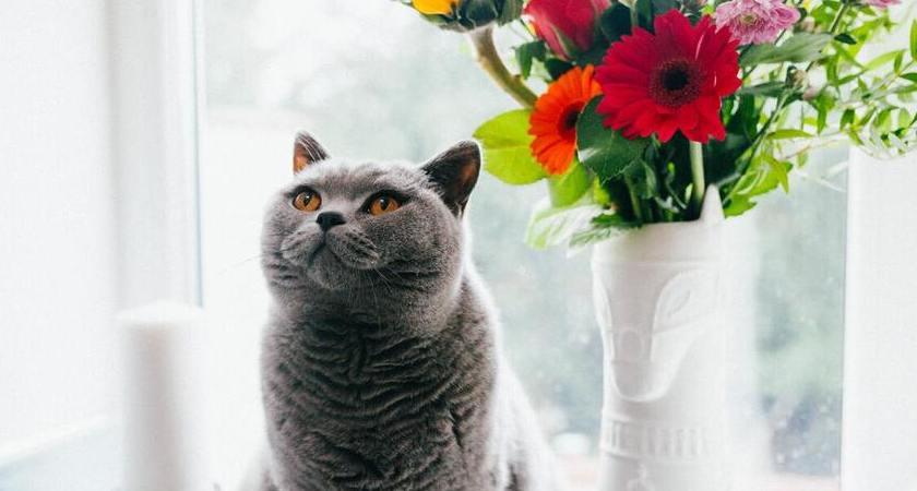 Cómo saber si mi gato tiene sobrepeso (y tips para prevenirlo)