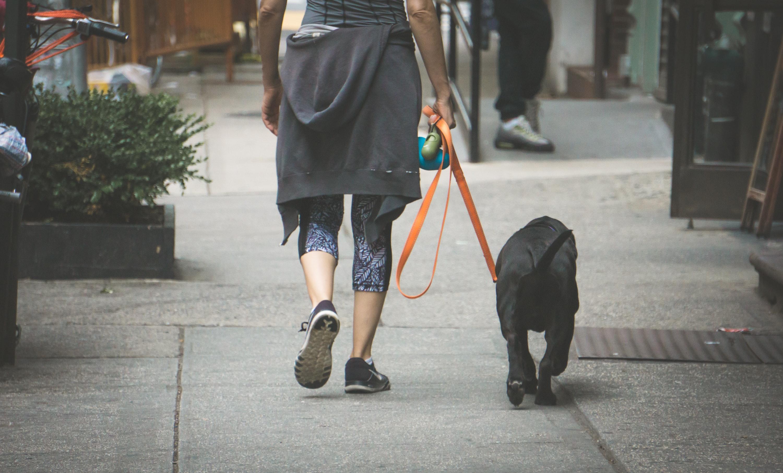 pasear perro prevención coronavirus