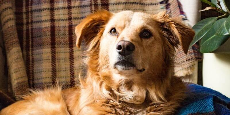 perro escuchando su nombre