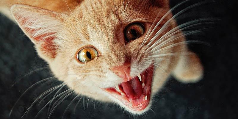 estímulos positivos para que tu gato sepa su nombre
