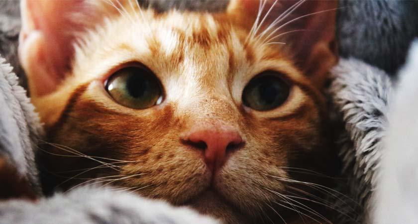 ¿Los gatos tienen resfriados? Aprende a reconocer los síntomas