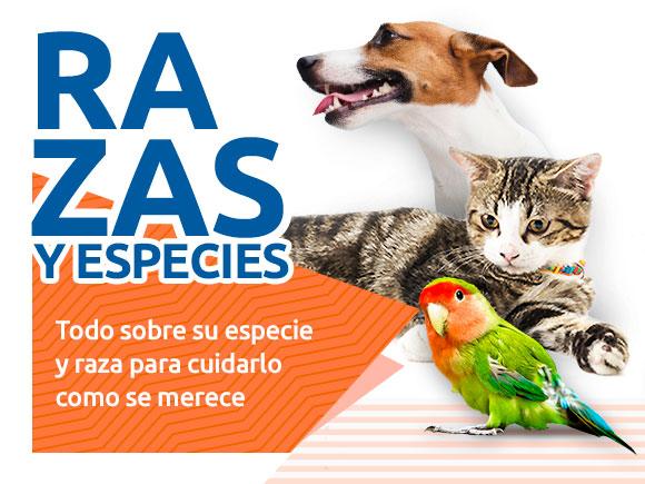 Principales razas de gatos, perros y aves