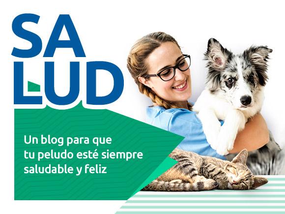 Consejos de salud y veterinaria para mascotas