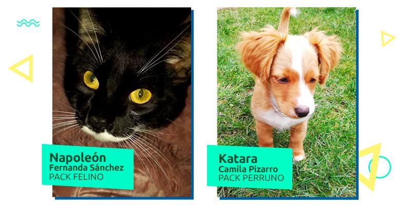 ganadores concurso mascotas sodimac