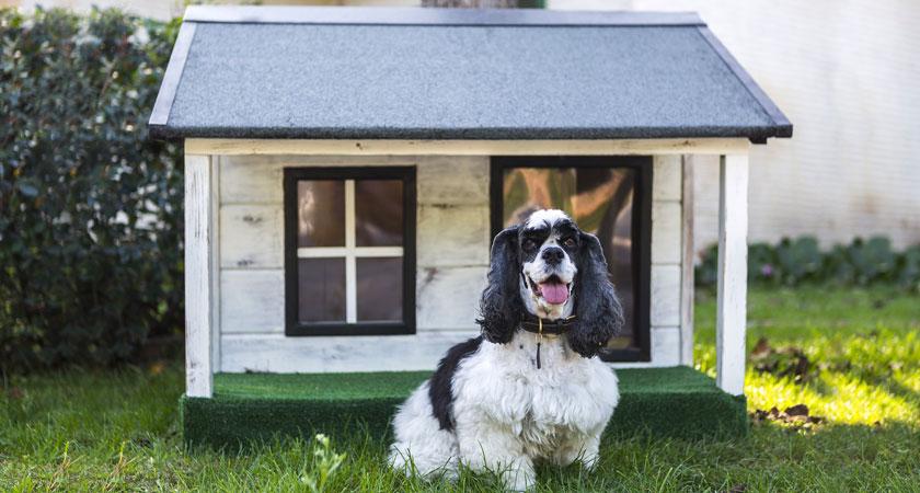 Casas para perro en invierno: tips de aislamiento contra el frío