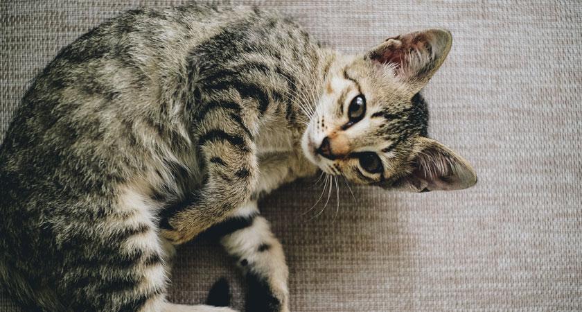 ¿Por qué mi gato vomita? 6 razones y qué hacer