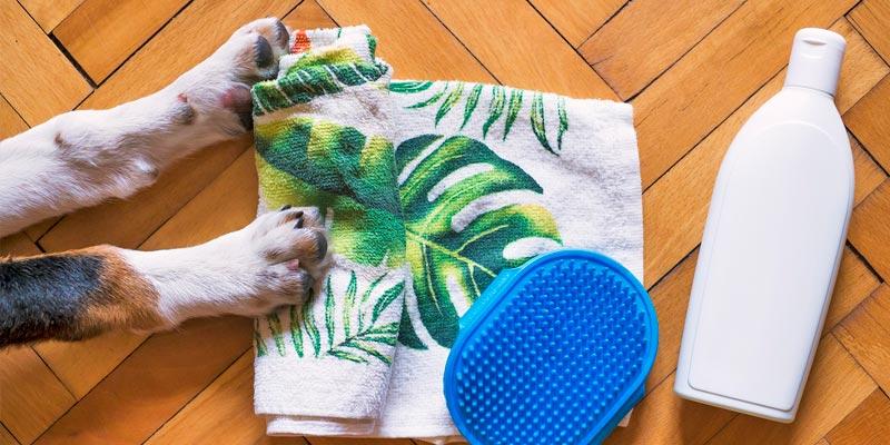 artículo baño perro