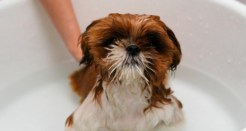¿Cuándo bañar a un perro? Tips veterinarios para la frecuencia de los baños