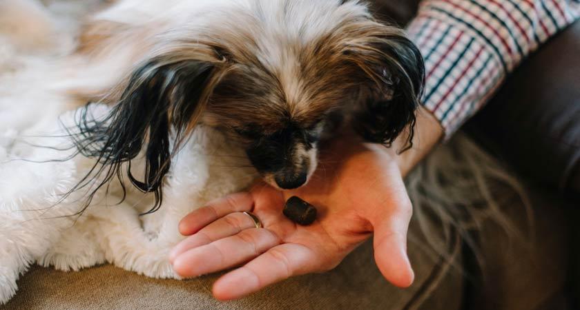 Premios caseros saludables para perro