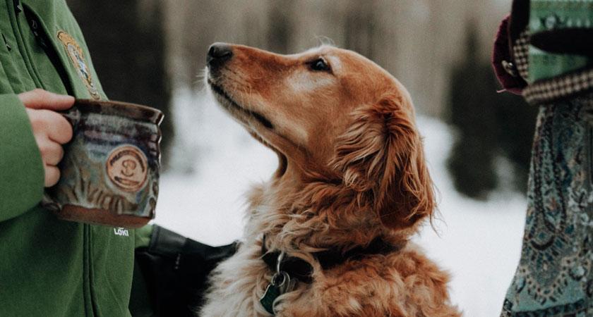 Cuidados para tu perro en temporada de invierno y lluvia