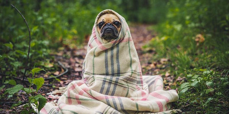 cuidados perro invierno abrígalo