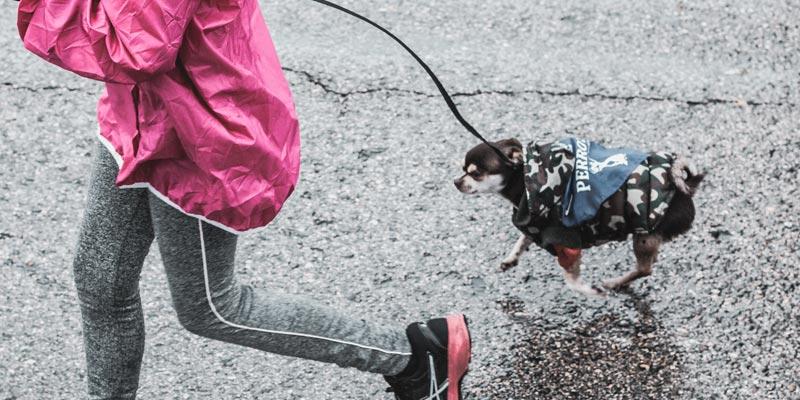 ejercicio para calmar a un perro nervioso