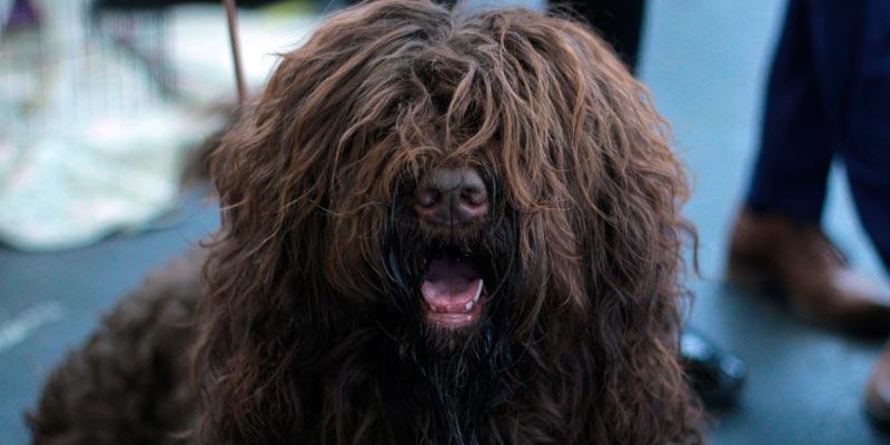 perro peludo