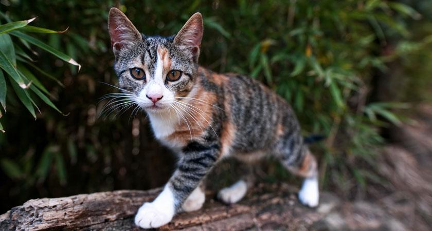 ¿Qué hacer si mi gato se escapa? Cómo rastrear a mi gato con chip