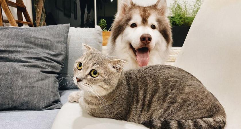 Mini muebles de tendencia para tus mascotas