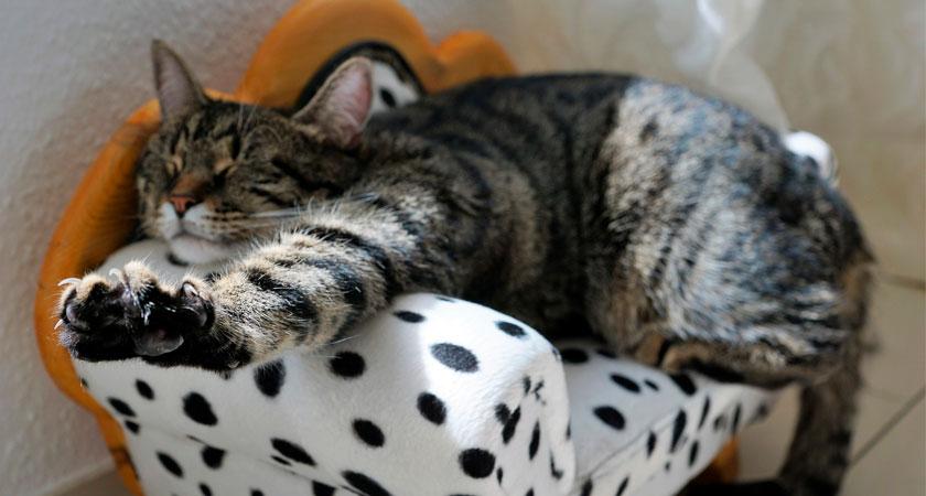 Pedicure felina: ¿Cómo cortar las uñas a los gatos?