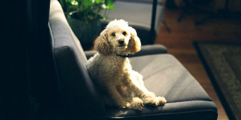 perro sofa desparasitacion verano