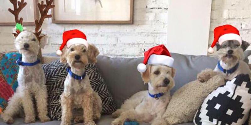 4 perros arriba de un sillón con vestimenta navideña-mascotas Sodimac